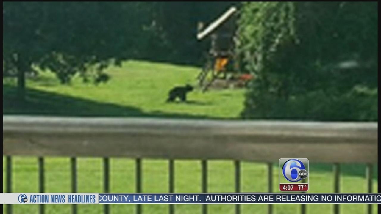 VIDEO: Bear sighting in Delaware County