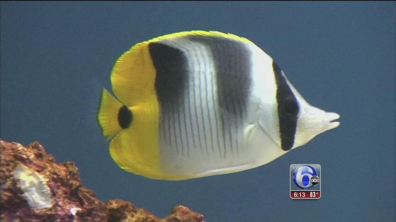 VIDEO: Mercury fish