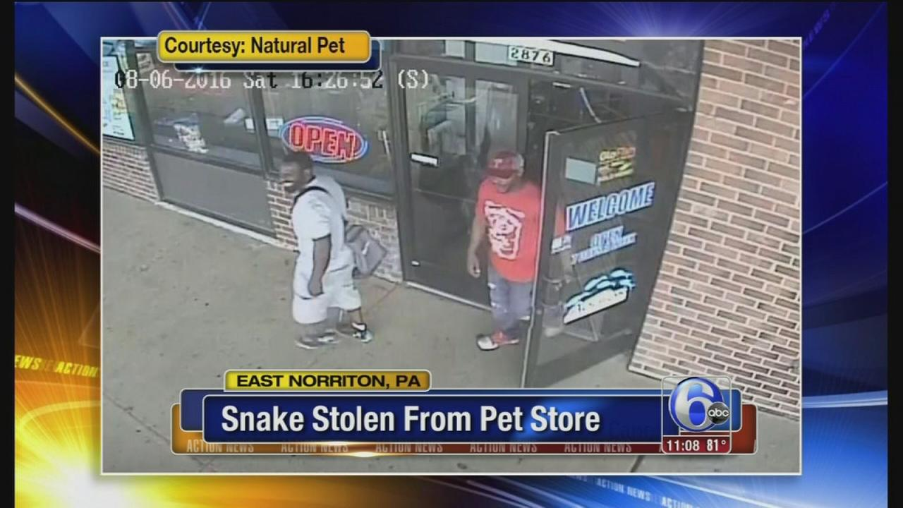 VIDEO: Snake stolen from Montco pet store