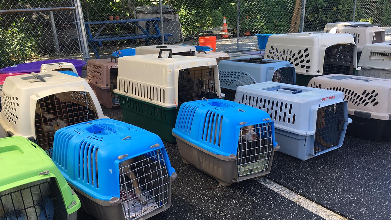 Dozens of dogs from the Deep South are getting a new leash on life, thanks to an animal shelter in Delaware.