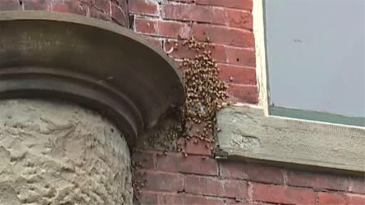 VIDEO: Bees invade city hall in northeastern Pa.