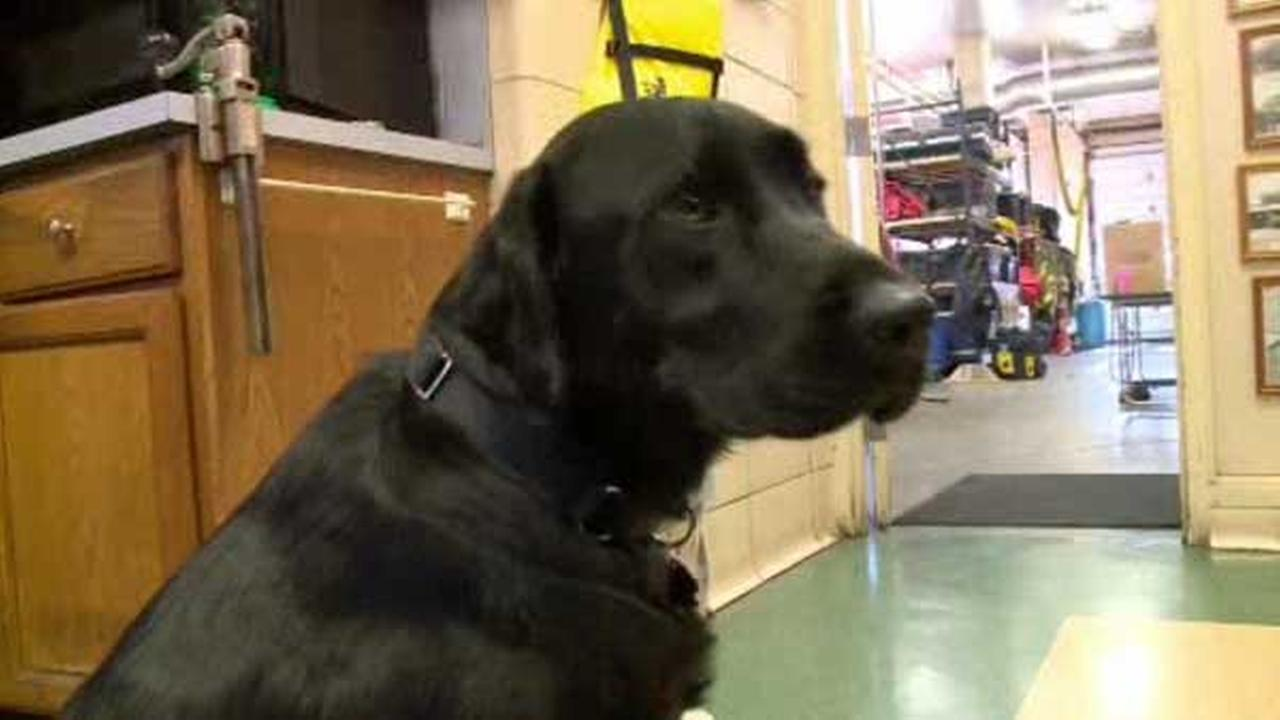 Ohio firehouse welcomes Smokey the comfort dog
