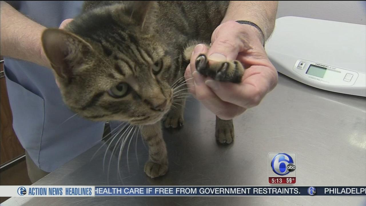 VIDEO: NJ could be first state to make declawing cats illegal