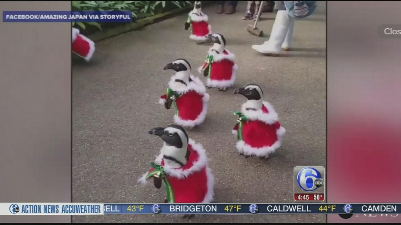 VIDEO: Check out this adorable Penguin Christmas parade