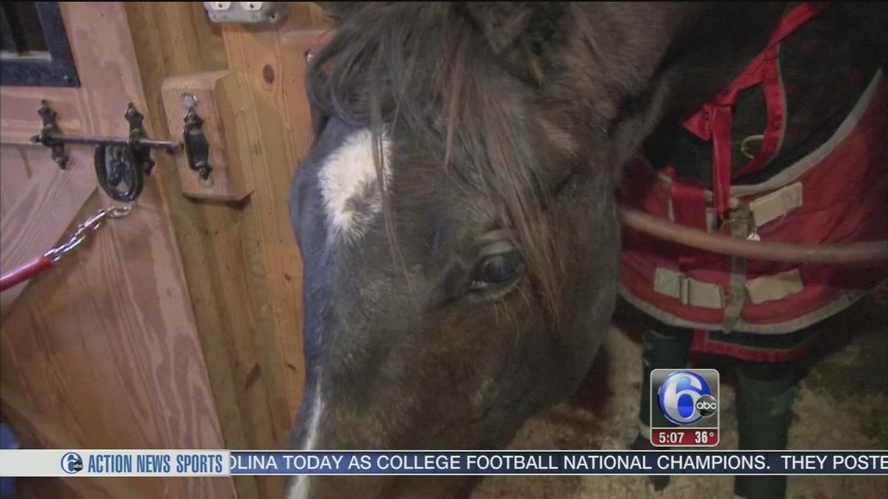 Horse rescued from icy pond in Malvern