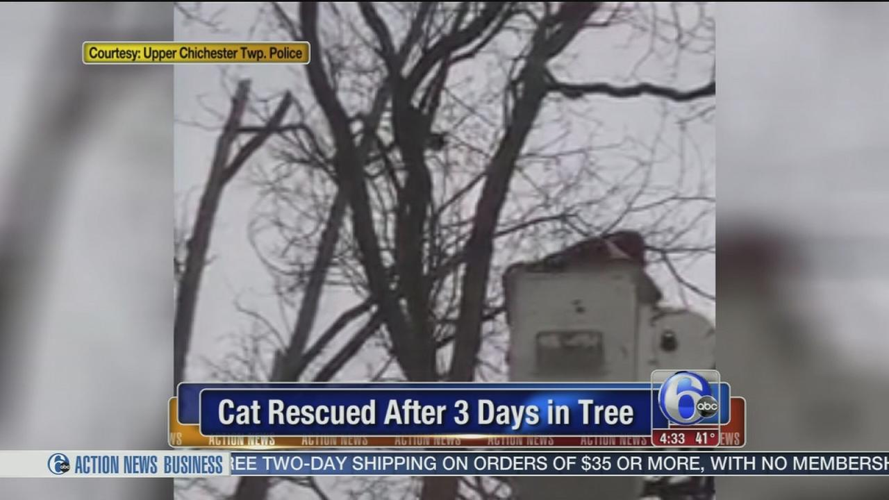 Cat rescued after 3 days in tree