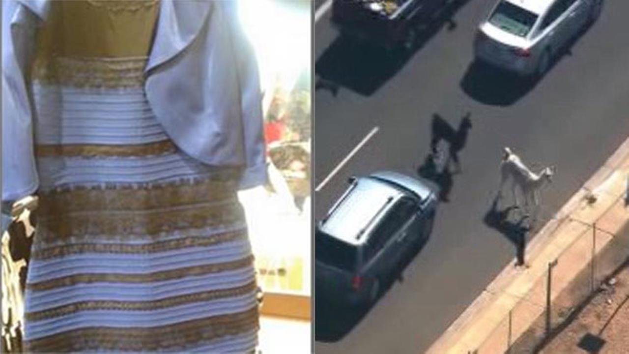 2 years ago: The Dress, llama drama captivated nation