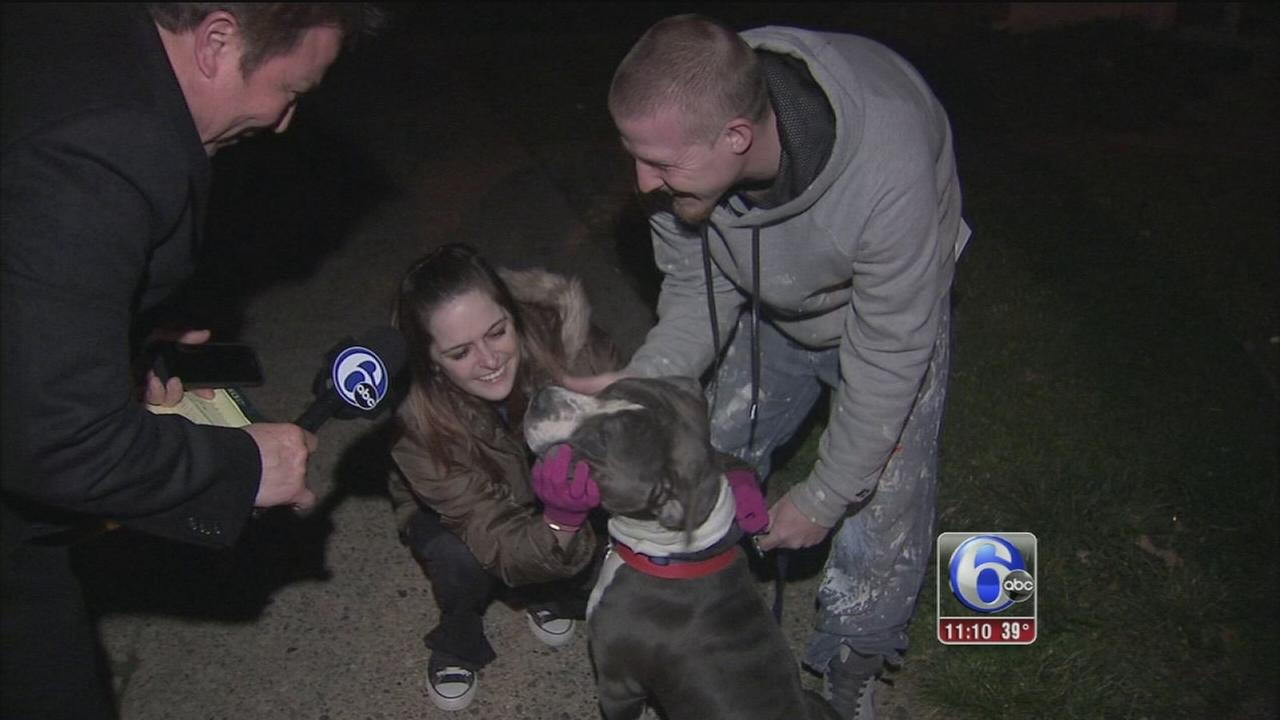 Couple reunites with missing dog after adoption mix-up