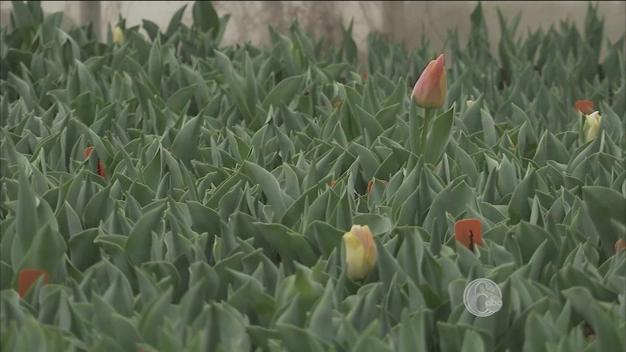 VIDEO: FYI - Flower Show Preview