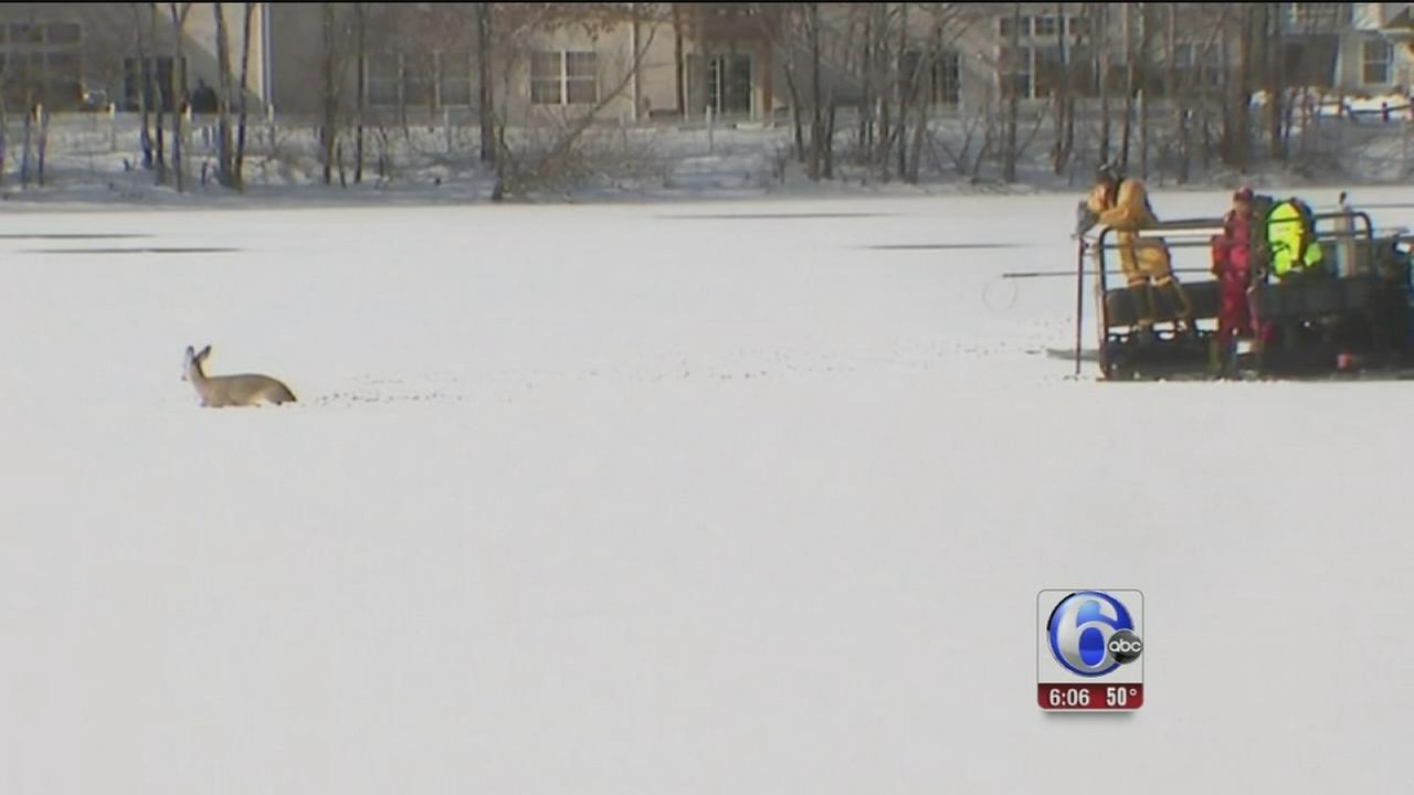 Rescue crews free deer stuck in pond in NJ