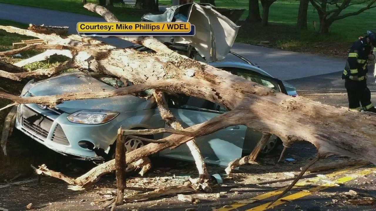 Del. AG, son avoid serious injuries when tree hits car