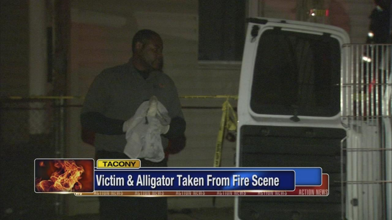 Alligator found inside apartment fire in Tacony, 1 hurt