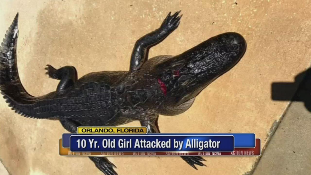 Alligator bites girl in shallow lake waters at Florida park