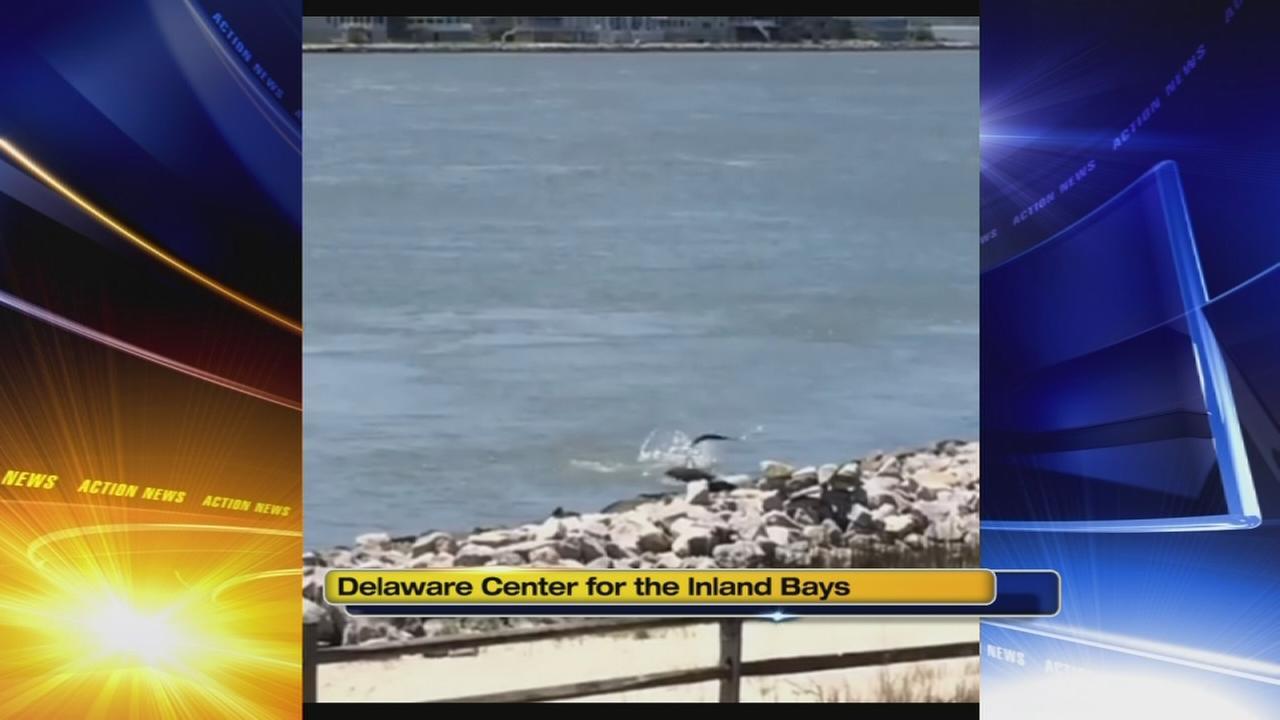 Shark spotted in Delaware
