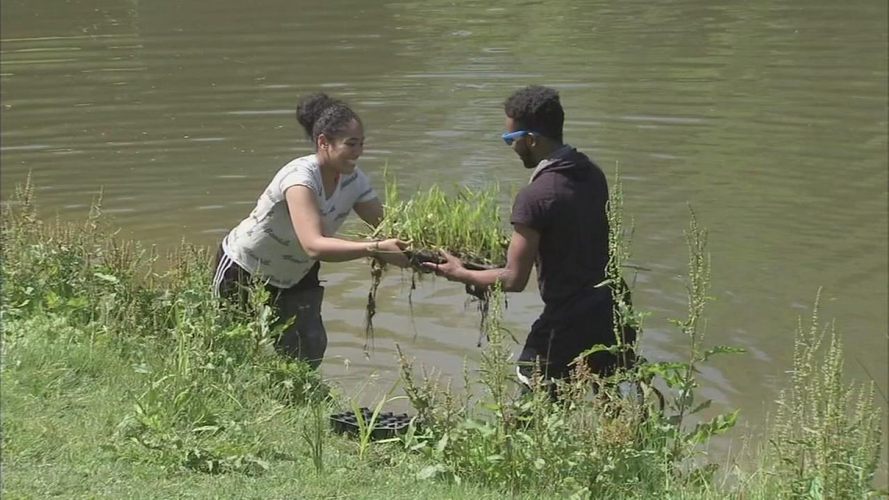 Students work to restore local park