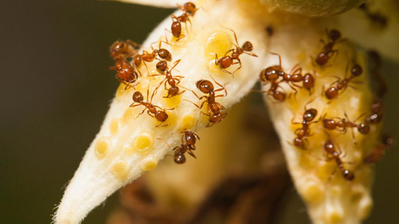 Delaware nurseries, plant purchasers warned of fire ants