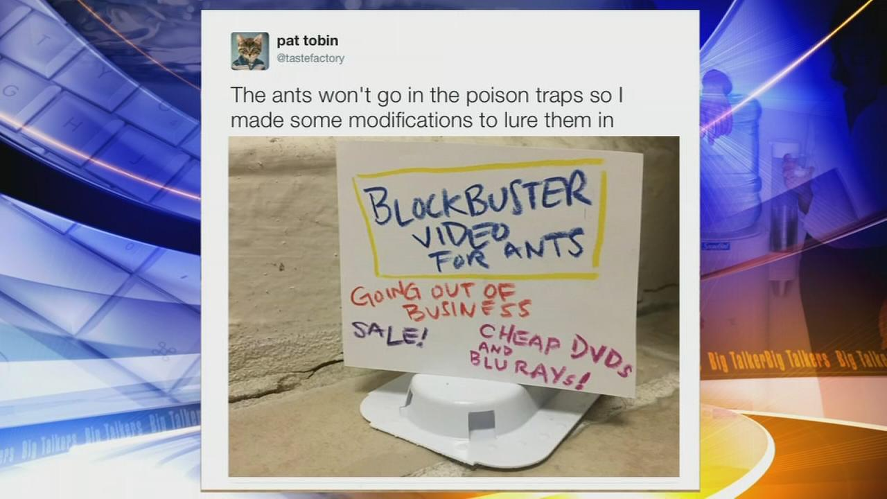 Brooklyn man creates hilarious signs to lure ants into traps