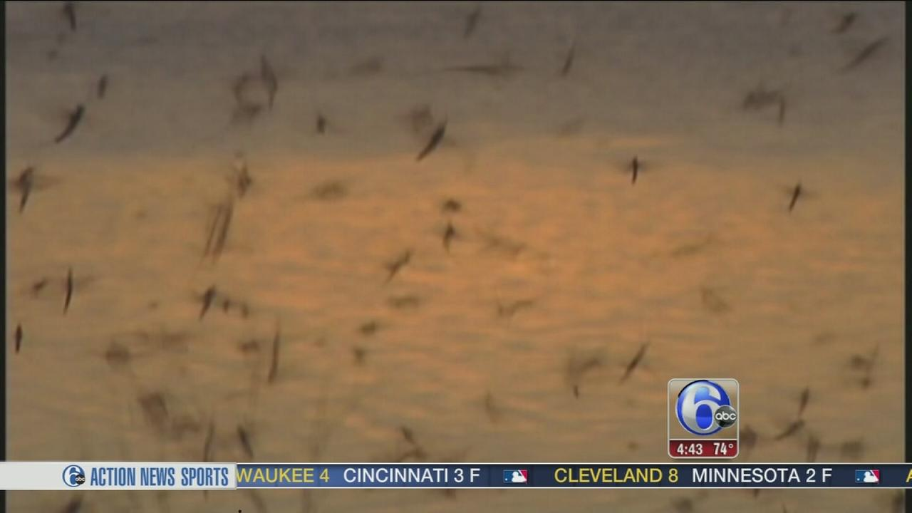 VIDEO: Massive swarmflies come out of the Mississippi River