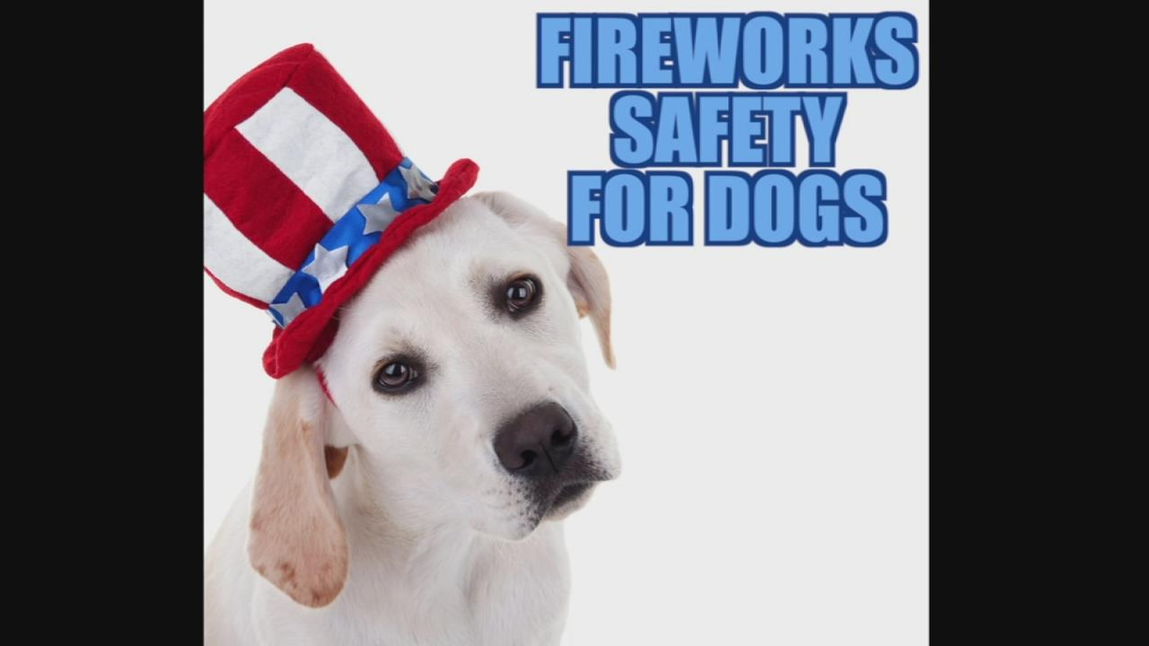 VIDEO: Fireworks safety for dogs