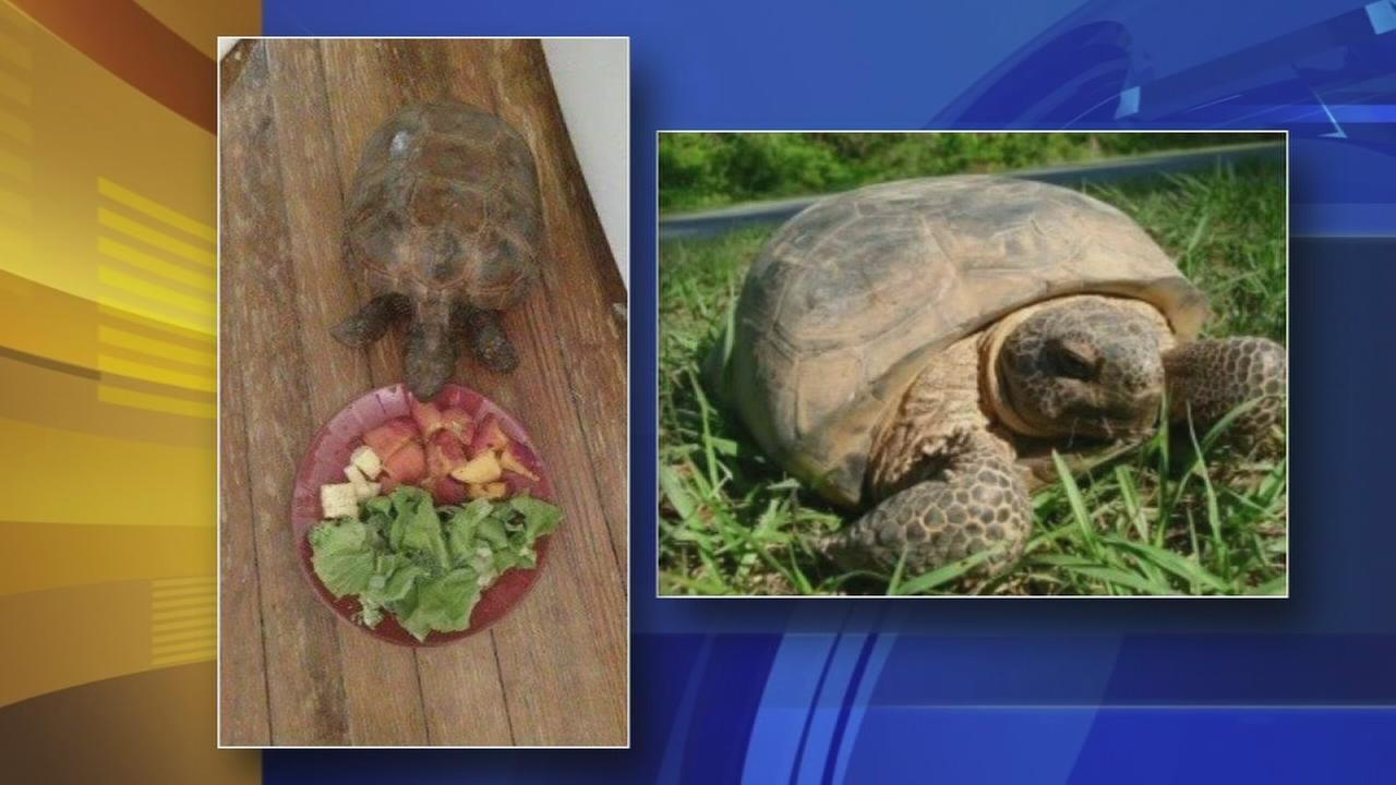 Delaware family searching for missing tortoise