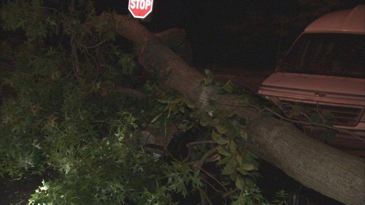 Tree falls on cars