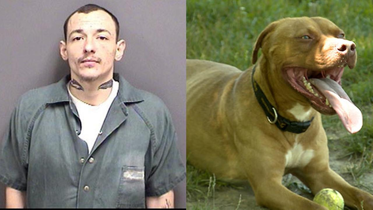 Pennsylvania man to prison for having dog fatally attack cat