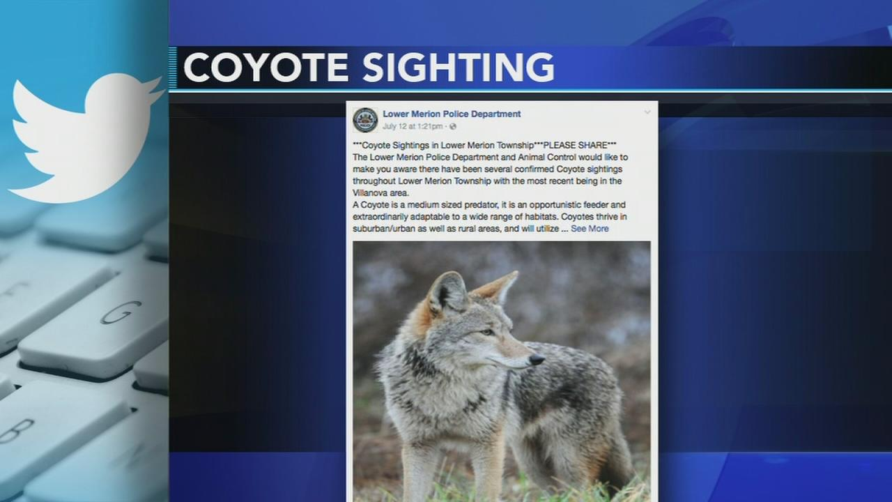 Alert issued for Montco residents after coyotes spotted