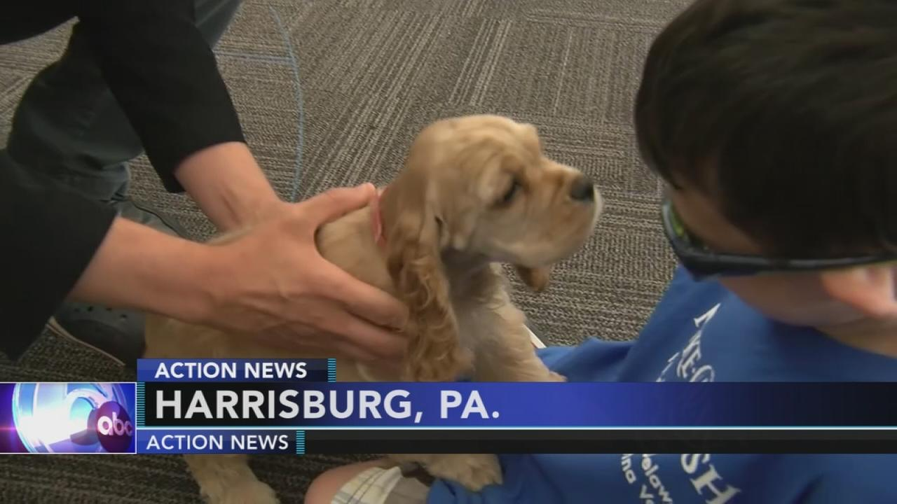 Montco boy with eye cancer meets new puppy