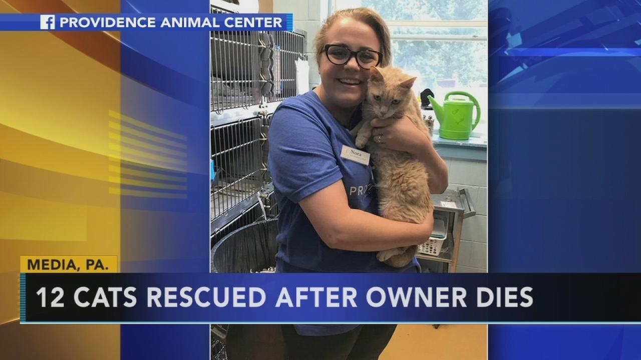 12 cats rescued from Delco home after owner dies