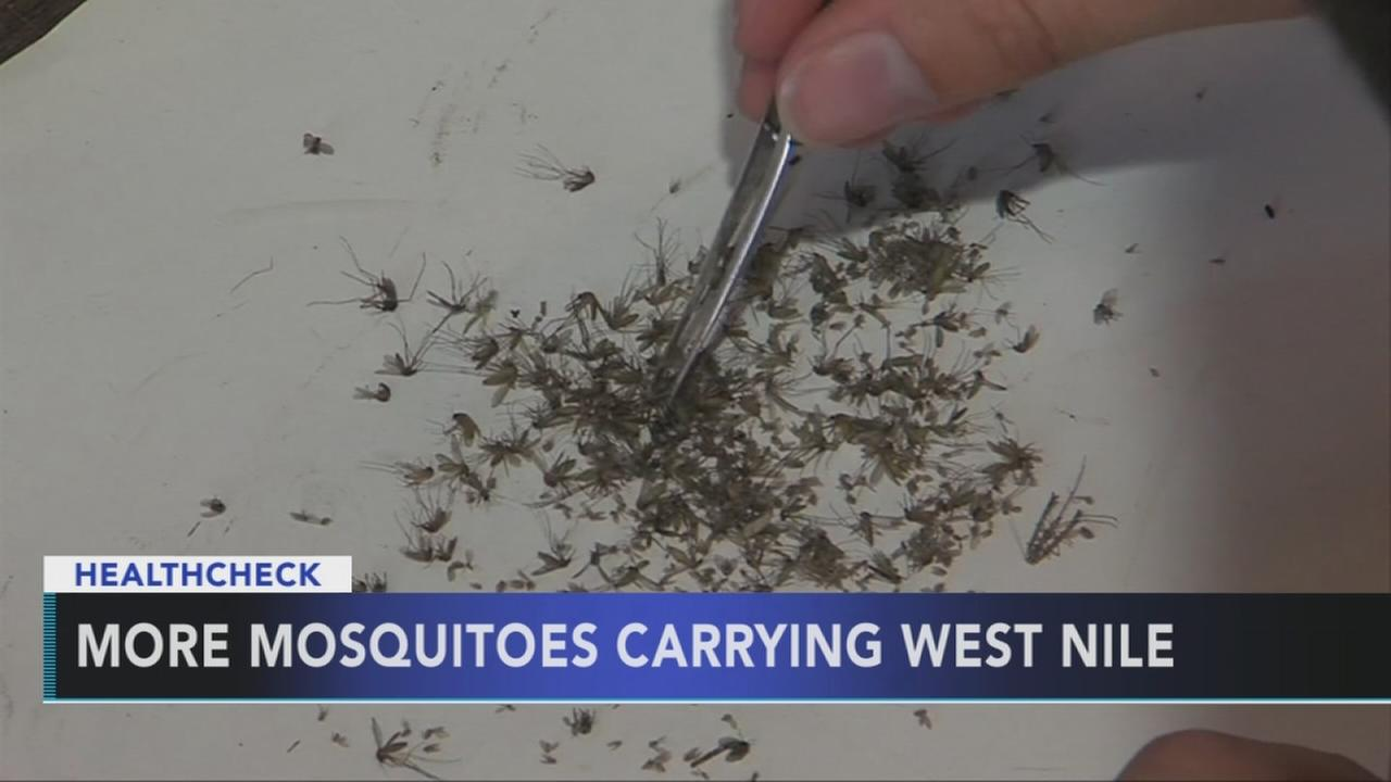 More mosquitoes carrying West Nile