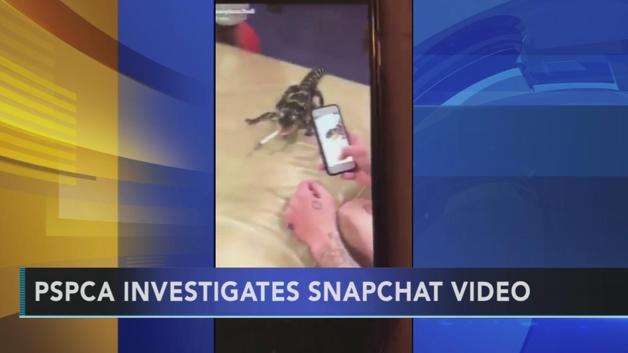 PSPCA investigates Snapchat video