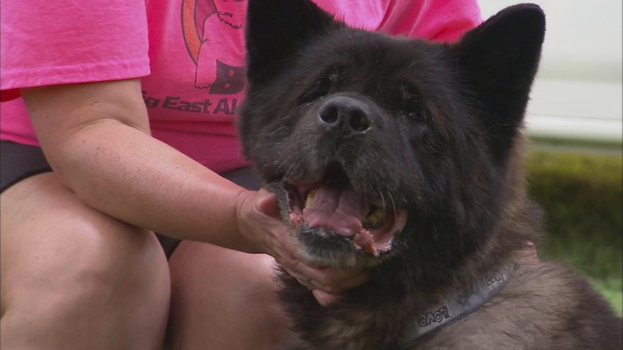 Shelter Me: Big East Akita Rescue