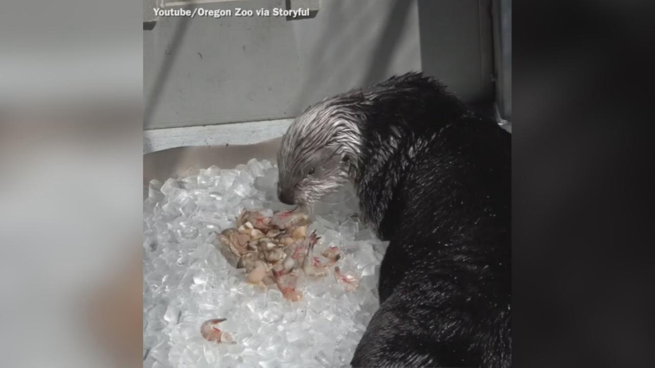 VIDEO: Oregon Zoo animals keep cool as temps rise