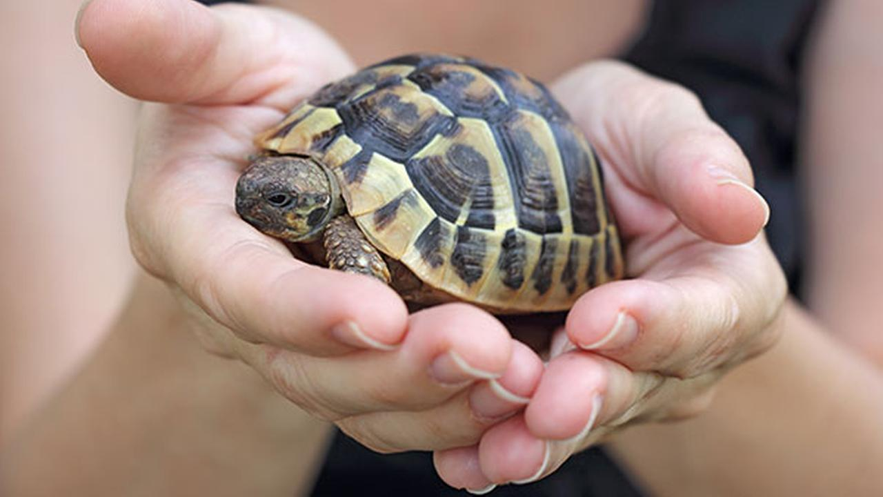 Pet turtles linked to salmonella outbreak in Pa. and NJ