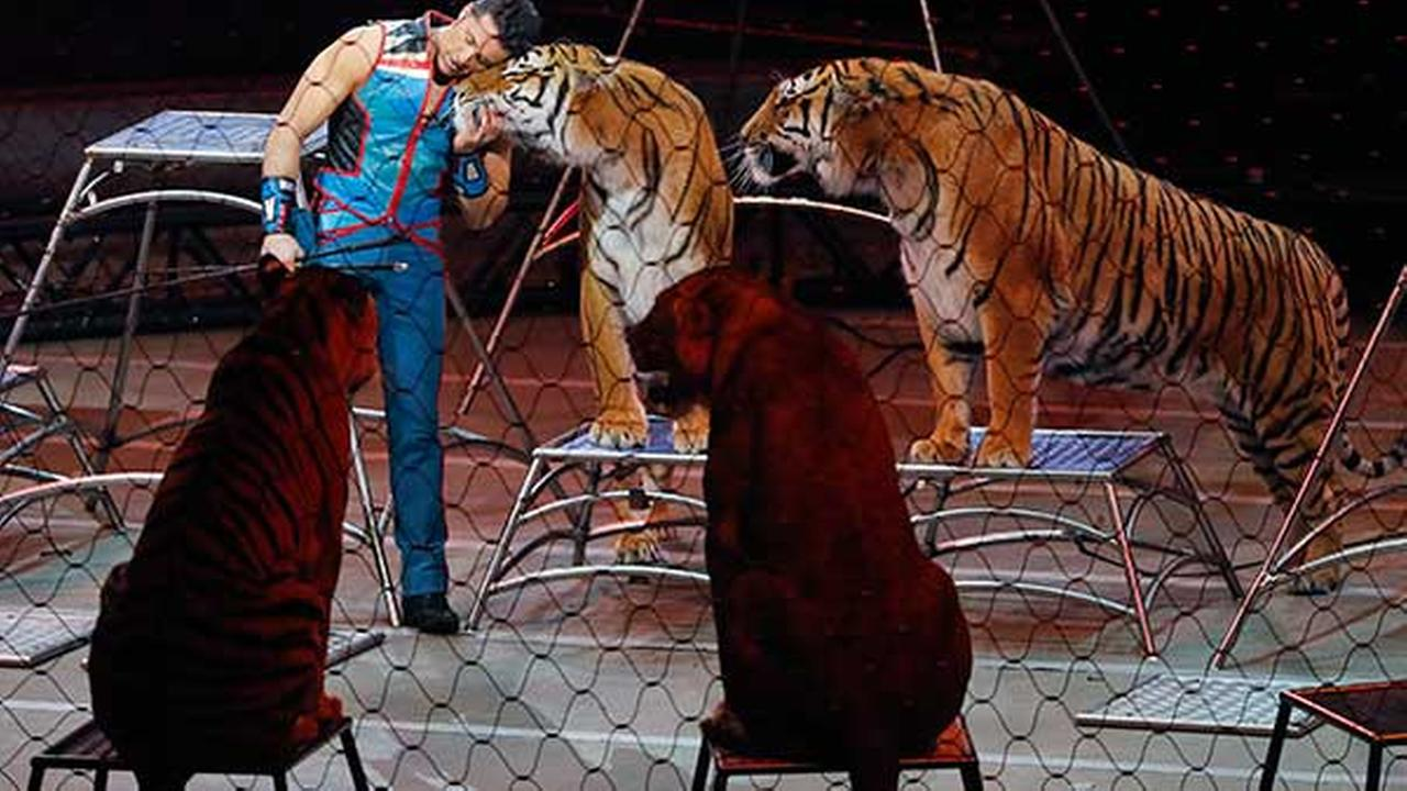 FILE - Big cat trainer Alexander Lacey hugs one of the tigers during the final show of the Ringling Bros. and Barnum and Bailey Circus in Uniondale, N.Y.