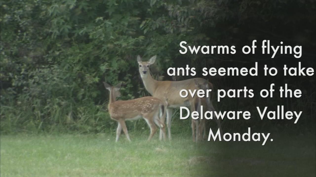 VIDEO: Swarm!