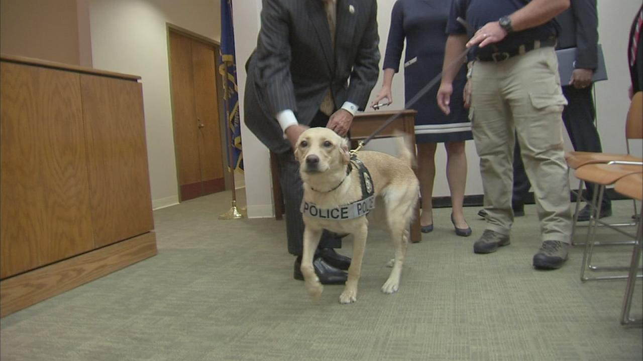 091317-wpvi-k-9-charlie-could-help-sniff-out-child-predators-video