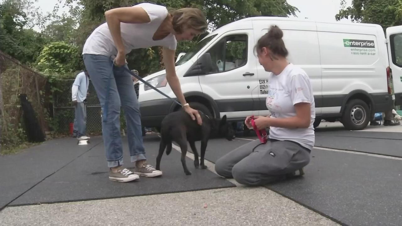 901417-wpvi-texas-dogs-in-delaware-video