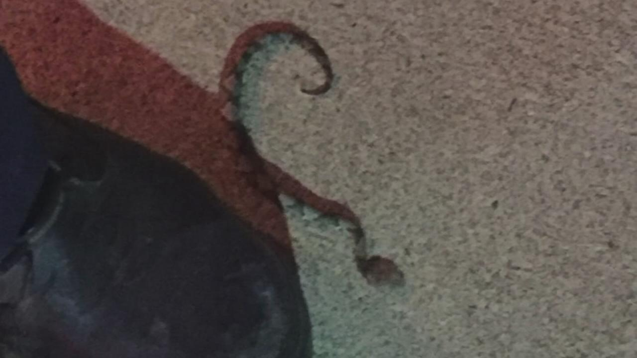 Virginia woman bit by snake while out to dinner