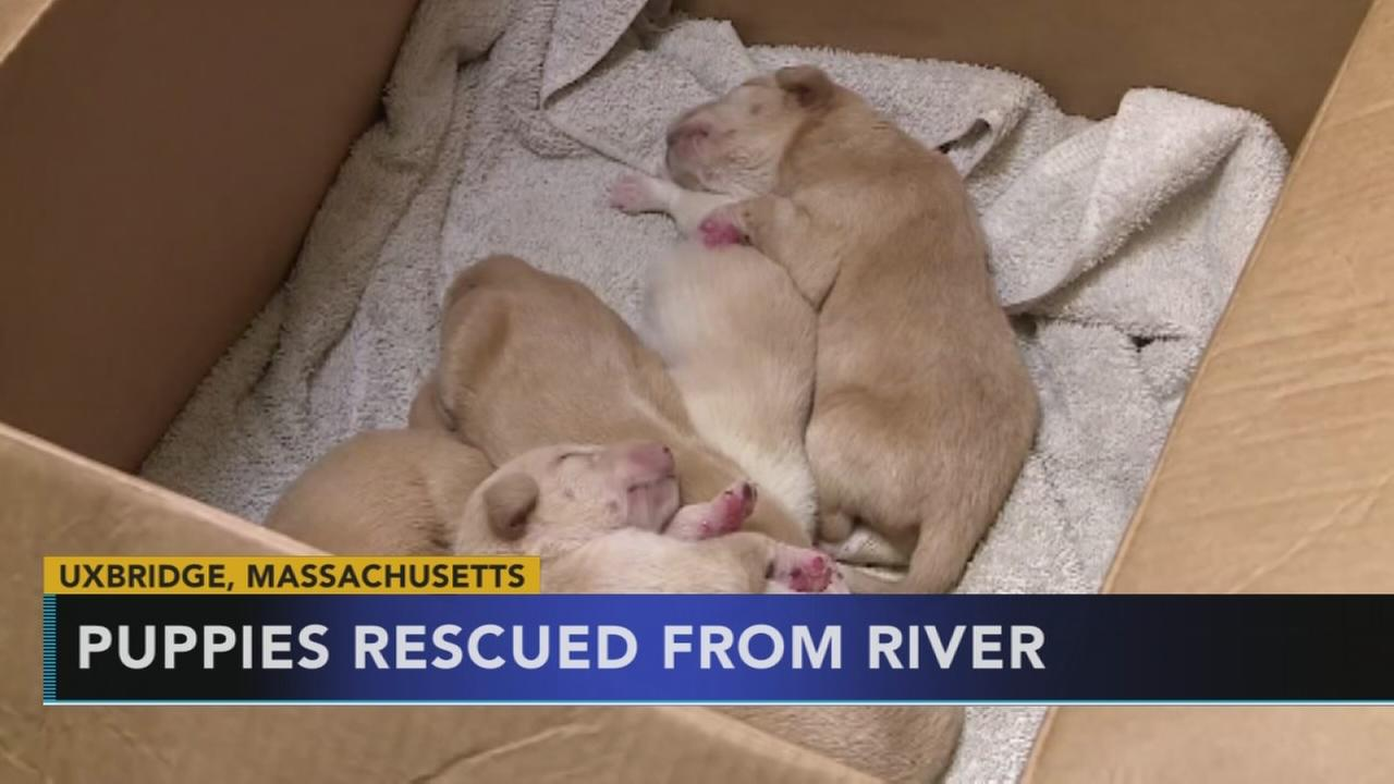 Puppies rescued from river