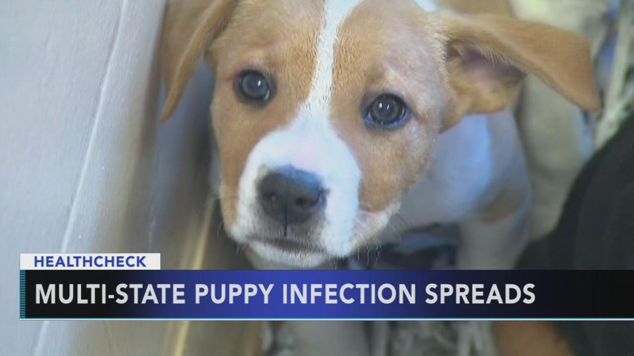 Multi-state puppy infection spreads
