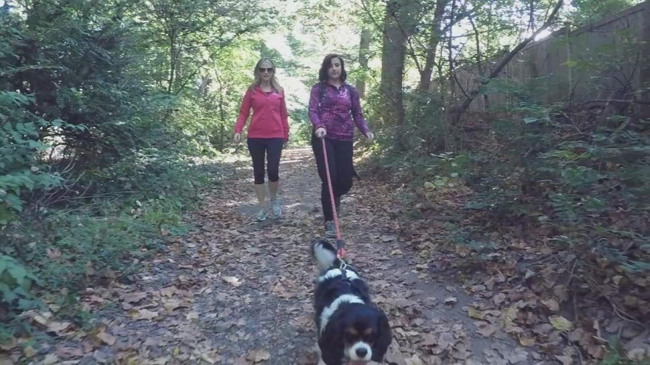 The All Trails Challenge will get you fit and moving