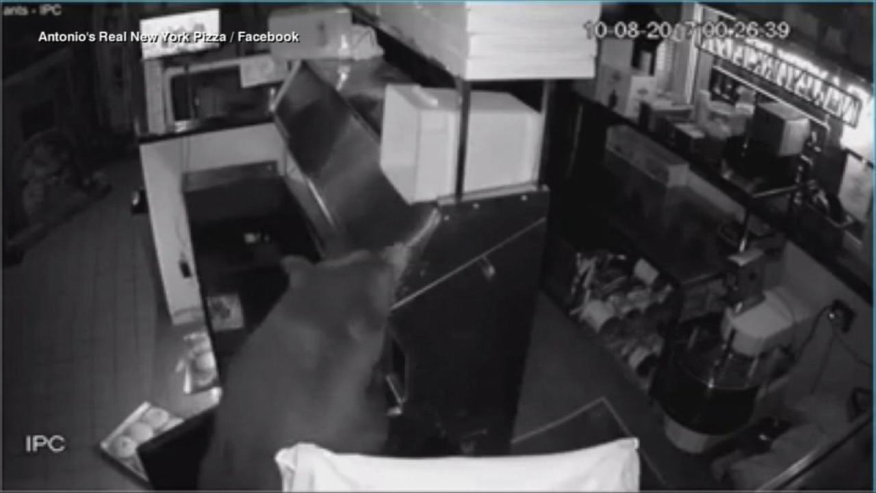 Bears break into Colorado pizza shop