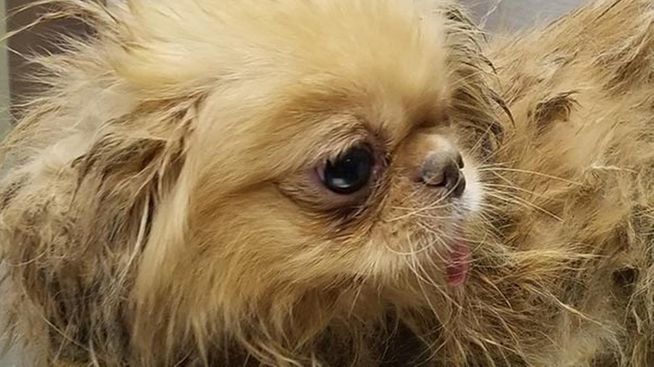 43 dogs found dead in Delaware; 32 more seized