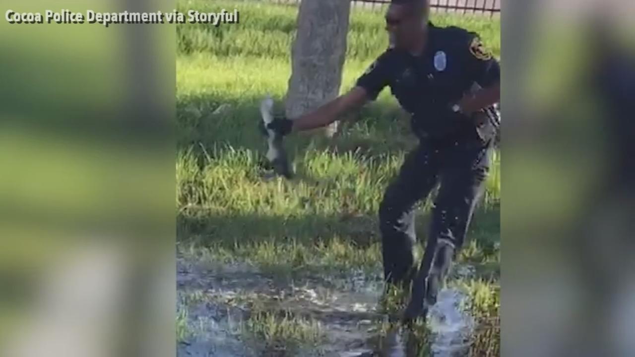 VIDEO: Florida cop wrangles baby alligator found at school