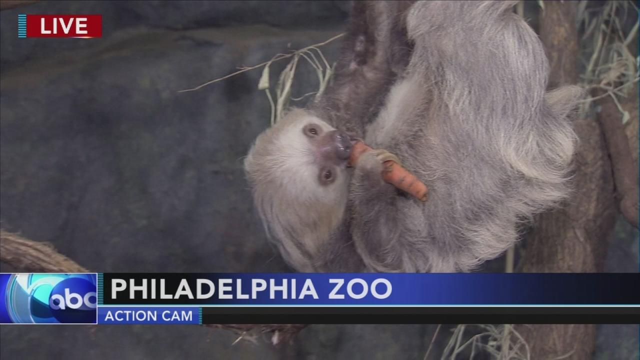 Cecily Tynan visits with a sloth at the Philadelphia Zoo