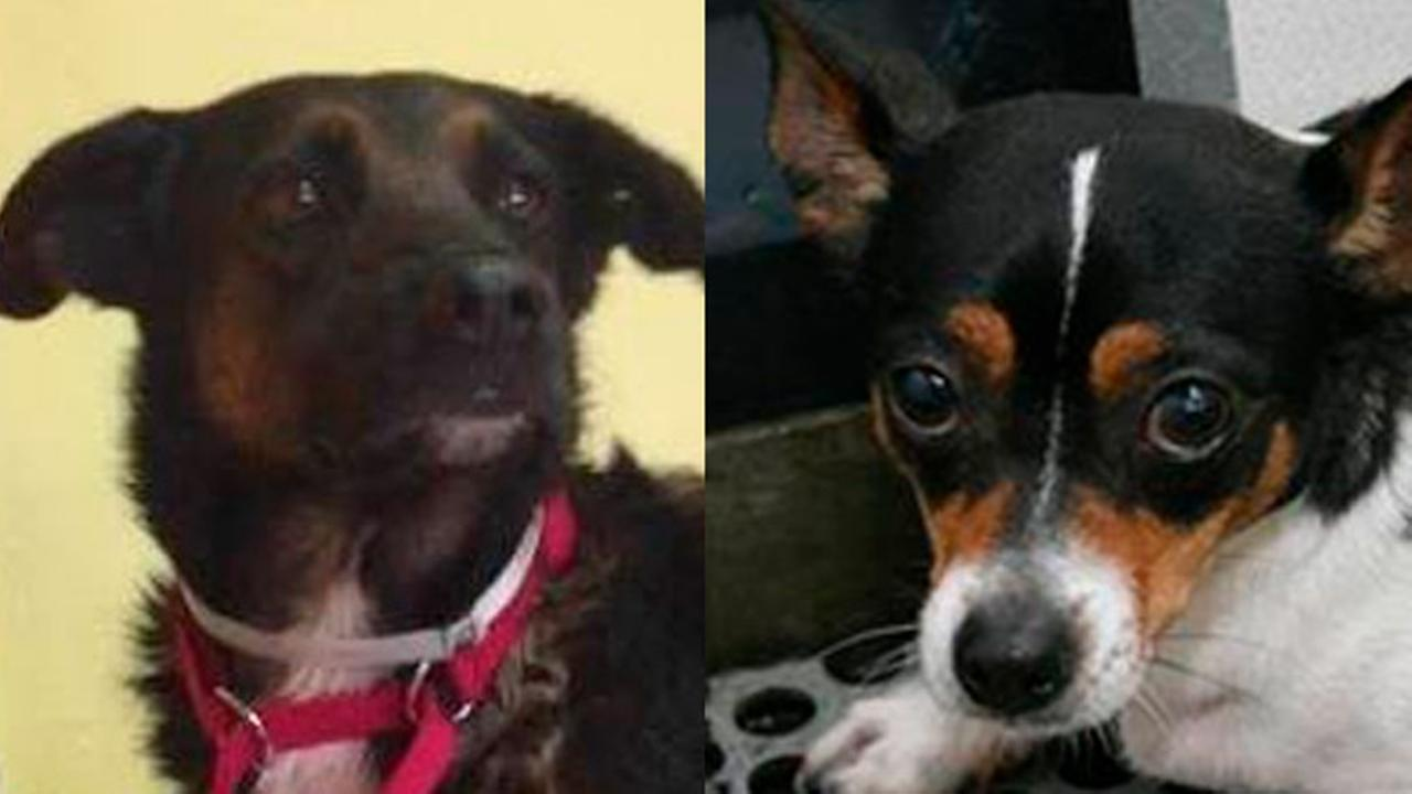 Dog killed in Philly fire survived hurricanes, other from hoarding situation