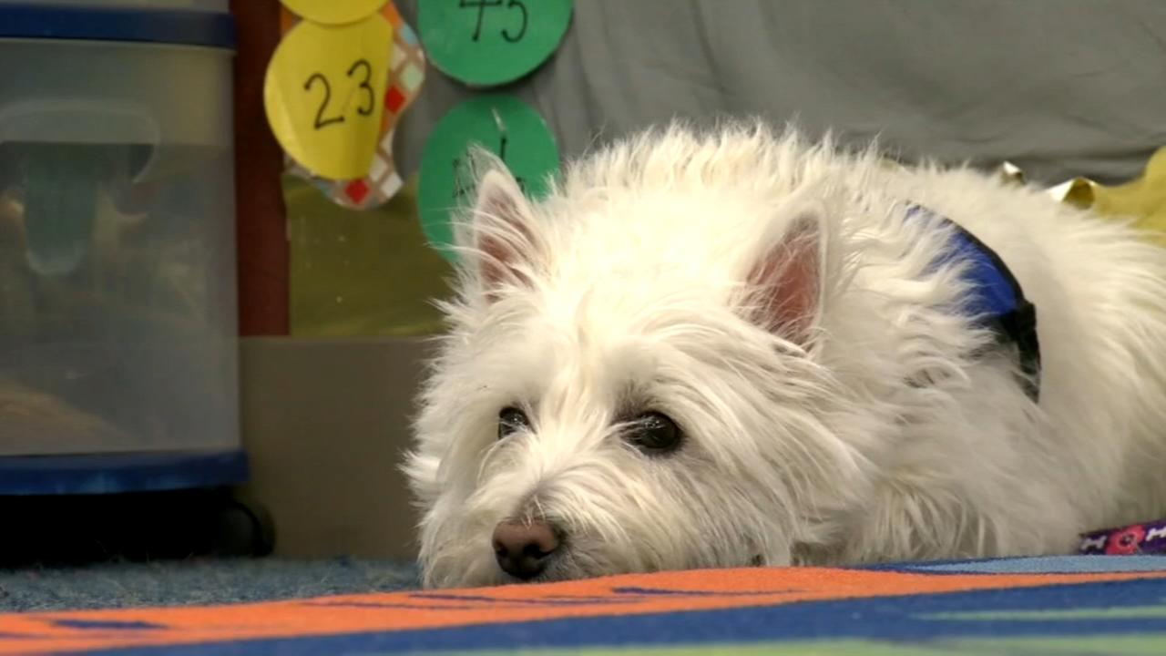 Special therapy dog helps keep the calm in Nebraska classroom