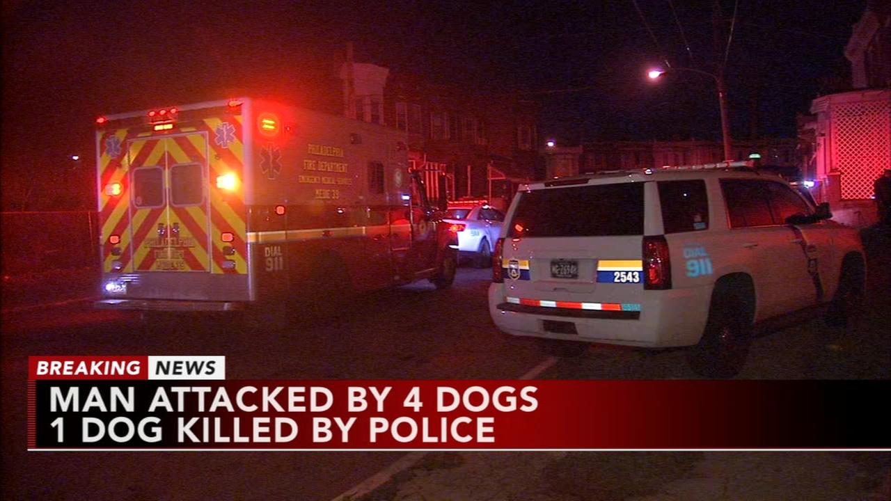 Police: Officer kills dog attacking man in Hunting Park