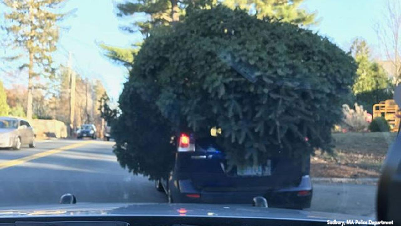 Police pull over car carrying very large Christmas tree